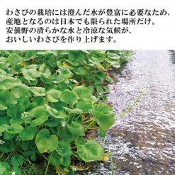 Raw grated wasabi from Azumino