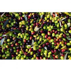 Kosher extra virgin olive oil - Barnea 110ml available now