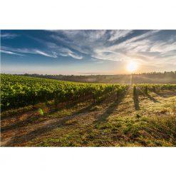 Sauvignon Blanc Reserve 2011 available now