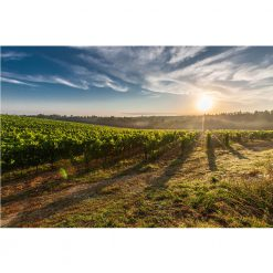 Estate Petite Sirah available now