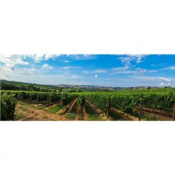 Cabernet Sauvignon Special Reserve available now
