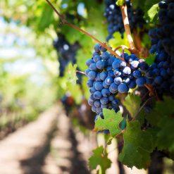 Cabernet Sauvignon Special Reserve at healthytokyo
