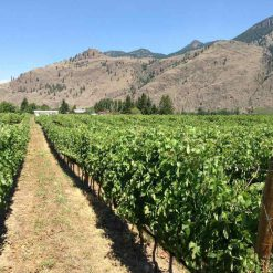 Clos du Soleil Winery field