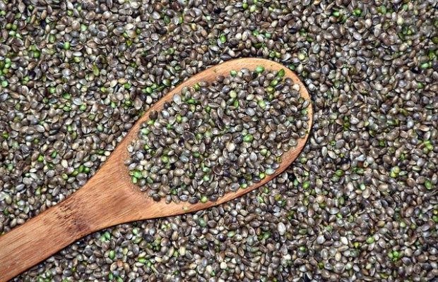 truth about hemp oil in japan